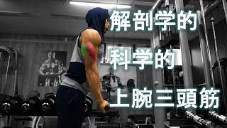 科学的 解剖学的でアプローチで鍛える上腕三頭筋[筋トレ]