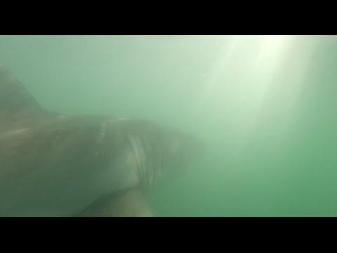 Shark deterrent research revealed