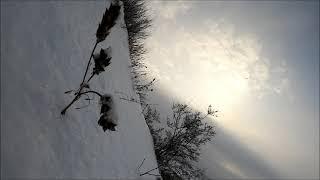 Зимний лес,природа,релакс.Альметьевск.