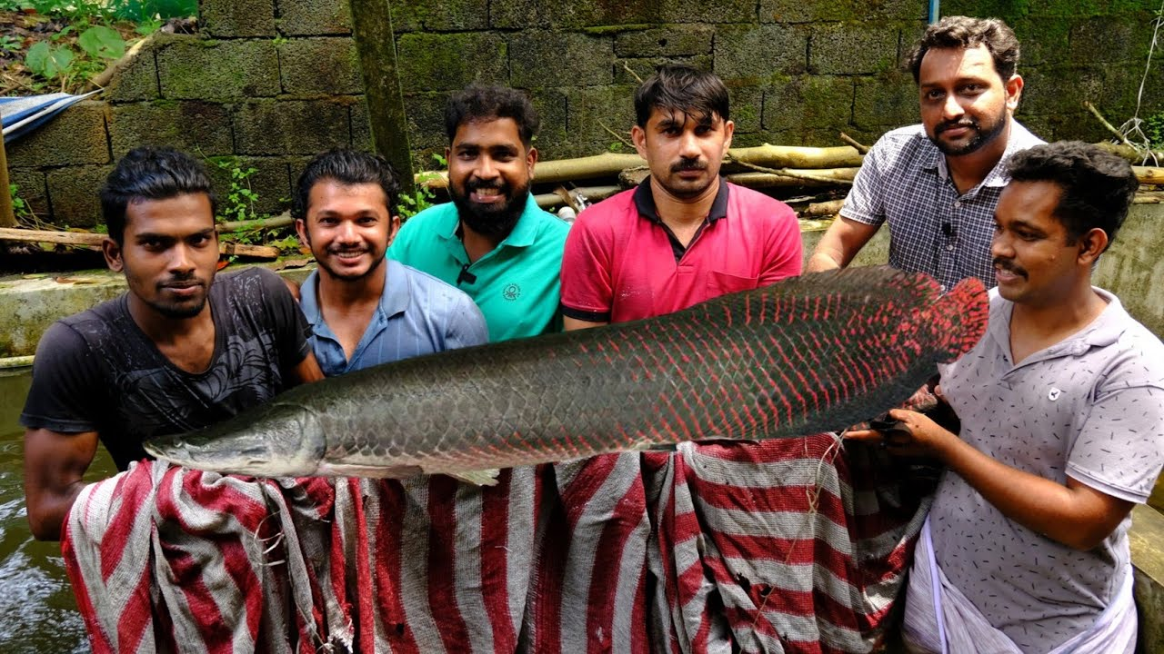 100Kg Arapiama Catching And Shifting   നിങ്ങൾ കാണാത്ത മീനുകൾ   Omkv Fishing   Arapiama