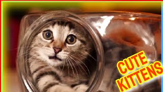 Cute Kittens 2021 Vol.32  Funny Cat Videos  Cute Cat Videos