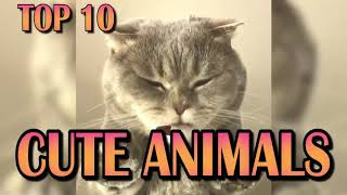 Top 10 Cute Animals || ManaMana