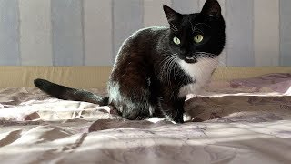 Как убрать кошачью шерсть с постельного белья
