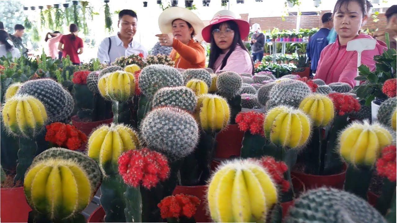 Làng Hoa Sa Đéc Đẹp Ngây Ngất Những Ngày giáp tết - Sa Dec flower village