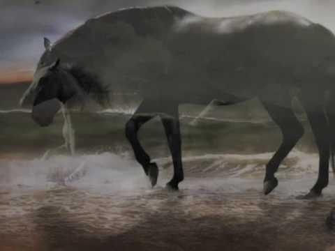 Dark Horse by David Lanz