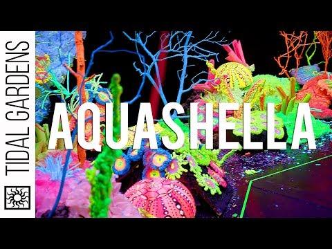 Aquashella Dallas 2019