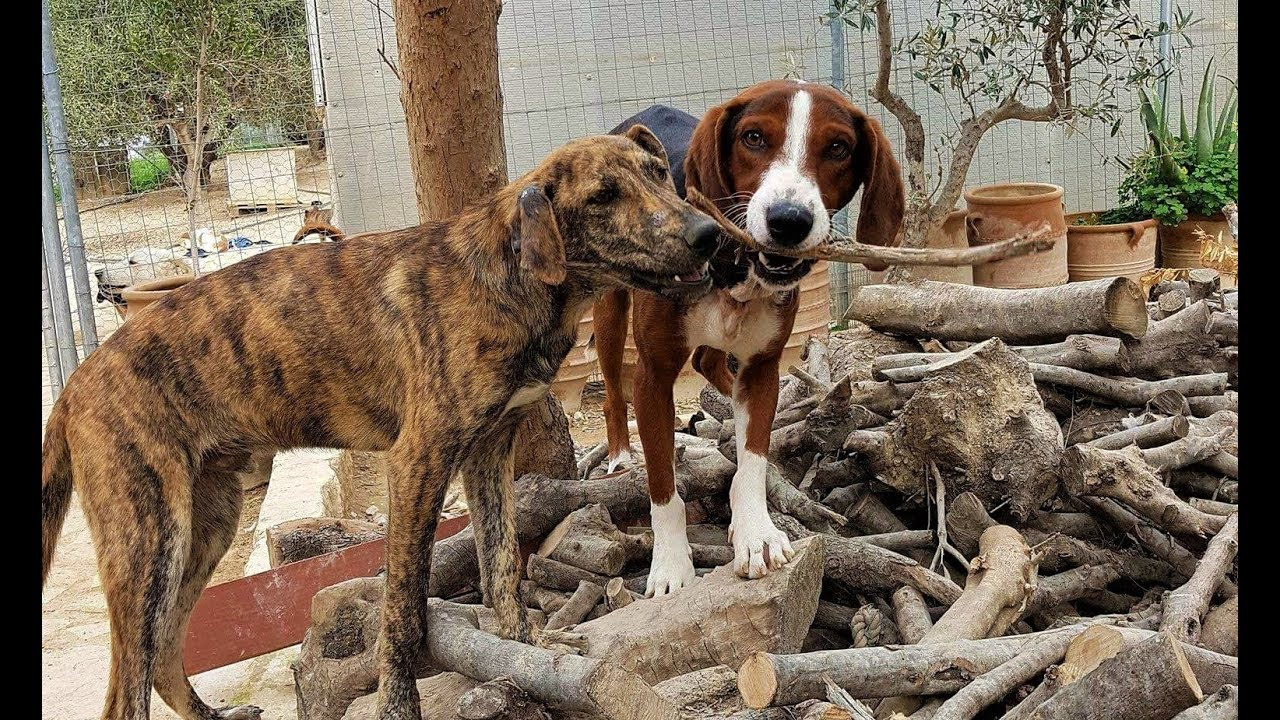 Takis Shelter Kreta
