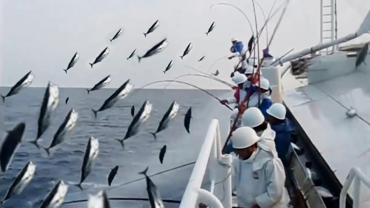 Amazing Fast Tuna Fishing Skill, Catching Fish
