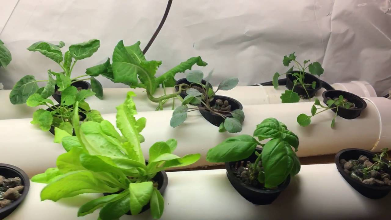 Indoor Hydroponic Garden for lettuce and herbs YouTube