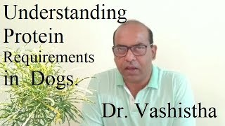 Importance of Protein in Dogs Part 1   VET For PET  
