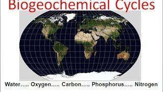 Biogeochemical Cycles Regular Biology Updated