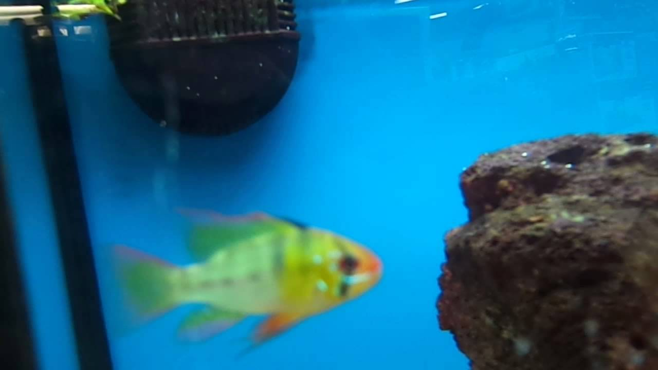 Petco fish and other youtube for Petco saltwater fish