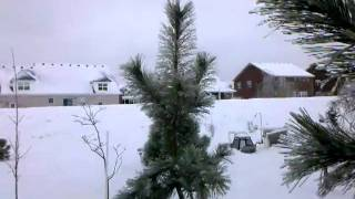 Tennessee Winter Wonderland