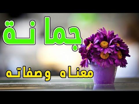 معنى اسم جمانة و صفات حاملة هذا الإسم Youtube