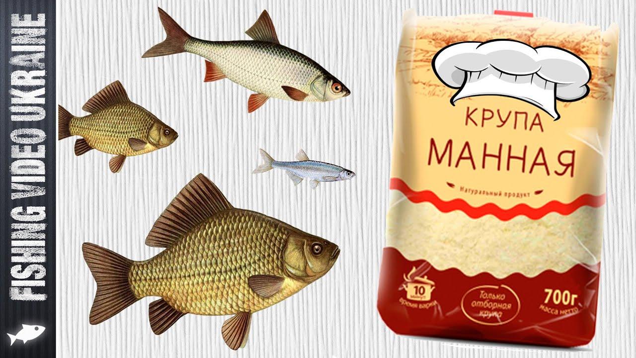 Манка для рыбалки (насадка) | Приготовление | HD