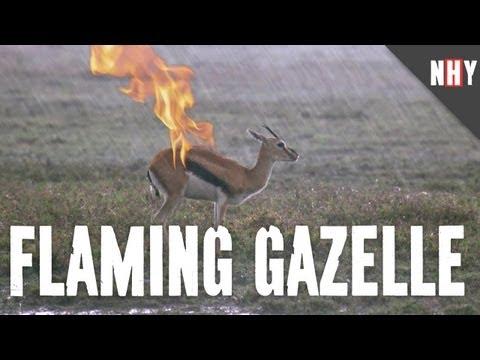 Flaming Gazelle Hates You
