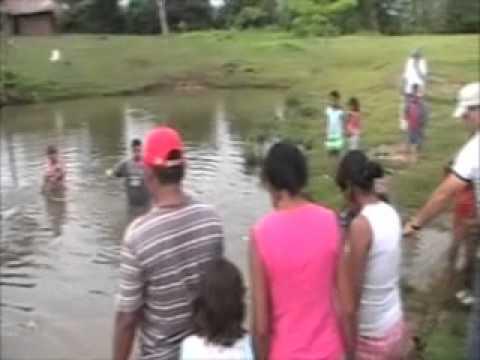 Alimentando las cachamas doovi Lagunas para cachamas