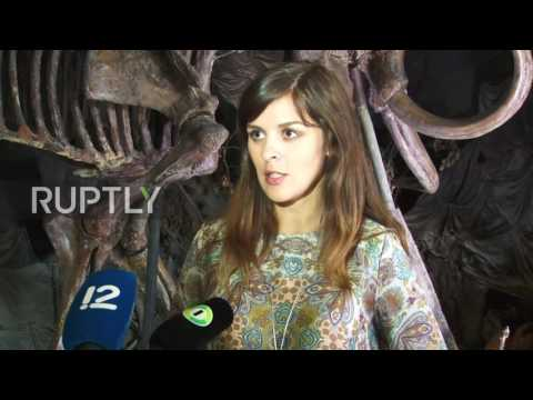 Russia: Remains of ancient woolly mammoth uncovered near Omsk