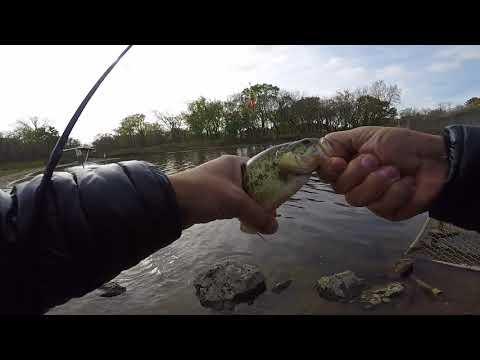 Busse Woods Dam / Salt Creek Bass Fishing