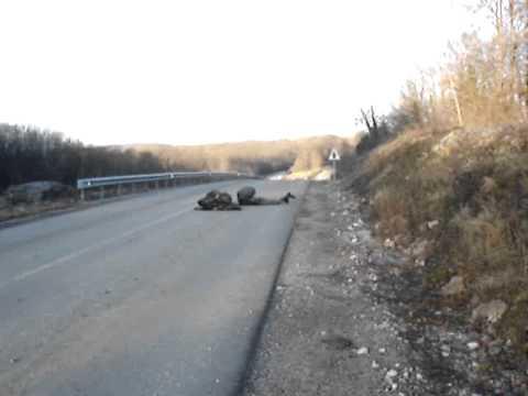 Army of Slovakia