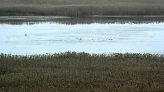 Лебединое озеро. Swan lake dance. HD TIMELAPSE VIDEO(музыка из балета music: P.I.Tchaikovsky,
