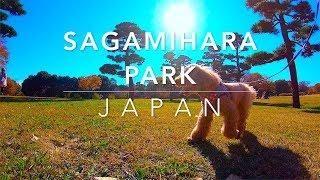 ラテ 愛犬のストリー Latte - a dog's story Sagamihara Park, Japan 相...