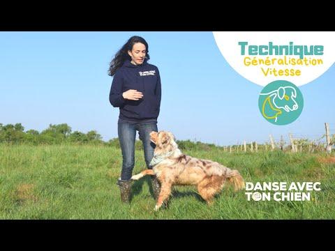 2 astuces pour améliorer sa technique de Dog Dancing : vitesse et généralisation