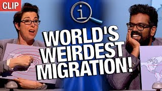QI | World's Weirdest Migration!