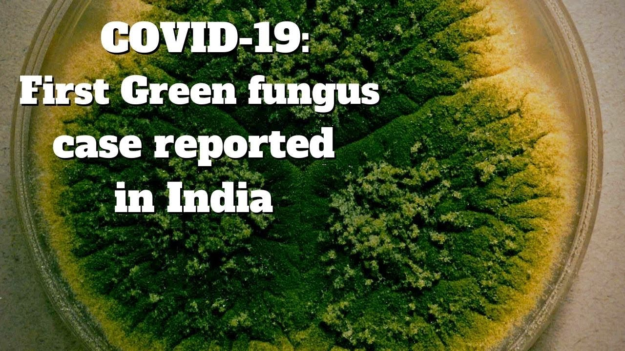 What is Green fungus and how is it affecting COVID-19 patients