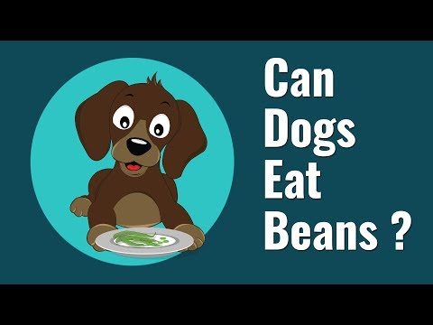 can-dogs-eat-beans?