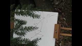 Hemlock-Drawing.AVI