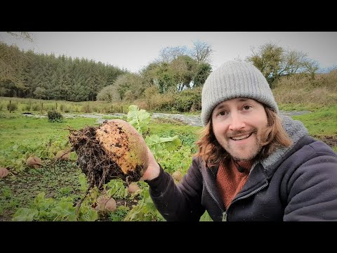 Top 10 Vegetables To Grow And Harvest In Winter