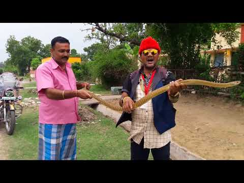 Difficult to rescue Cobra but easy to rescue indian rat snake snake rescue team Panchet dam (N G O)