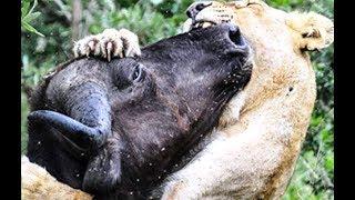 Nat Geo Wild: Смертоносная Африка  2019