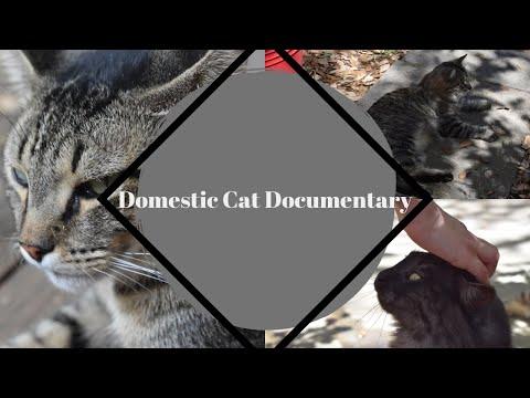 Domestic Cat Documentary