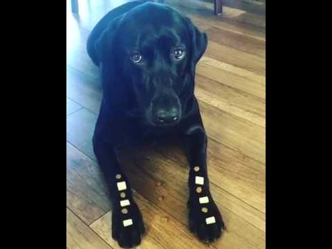 Dog training - Focus - Smart dog