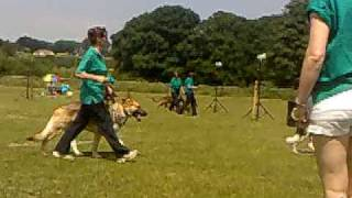 K9 Rescue Remedy's Dog Display Team