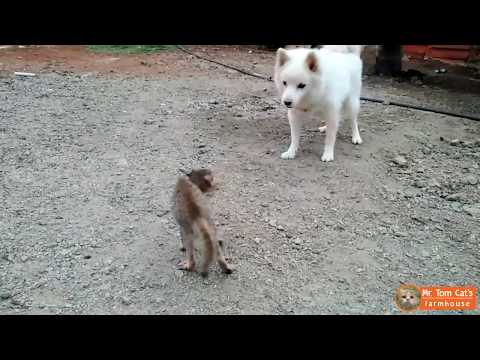 Dog VS Cat Fight - Who Wins at the End?