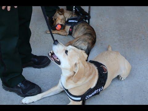 Resource Comfort Dogs in Schools