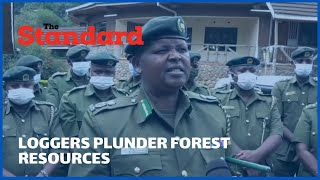 Illegal loggers take advantage of Covid-9 remand protocols to plunder forests resources