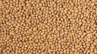 Health Benefits of Sorghum - Nutritional Information