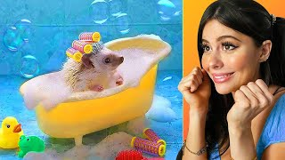 Cutest baby animals that will melt your heart  part 1