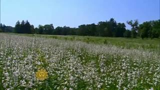 Nature  New Jersey wildflowers
