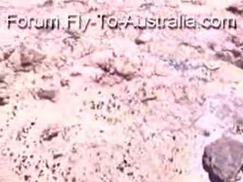 Australien Forum - Australia Community -Dead Turtle near ...