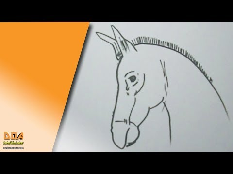 Best 24 How To Draw A Donkey Step By Step Easy For Beginners Kids