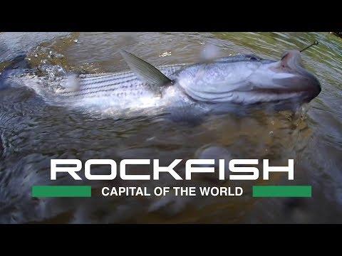 Fishing In The Rockfish Capital Of The World - Weldon, NC
