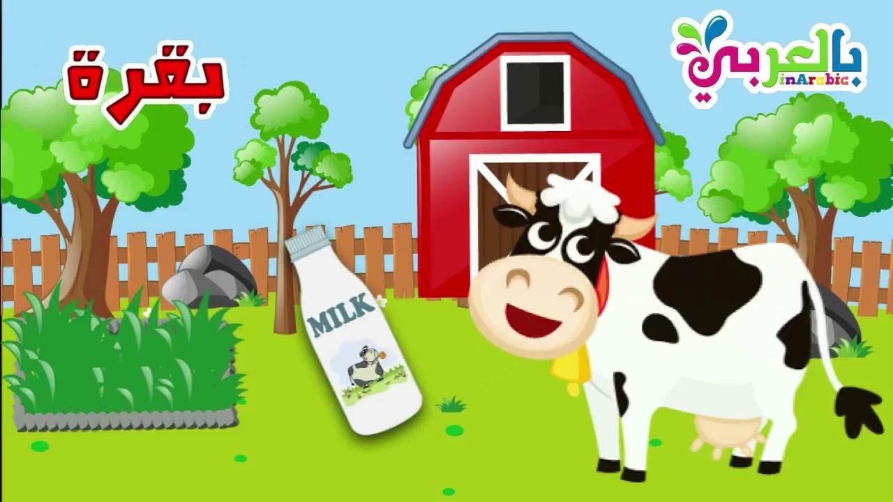 معلومات عن البقرة للأطفال Cow Youtube