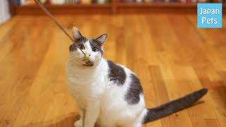 猫の しつけ にクリッカートレーニングというものがあるのをご存知でし...