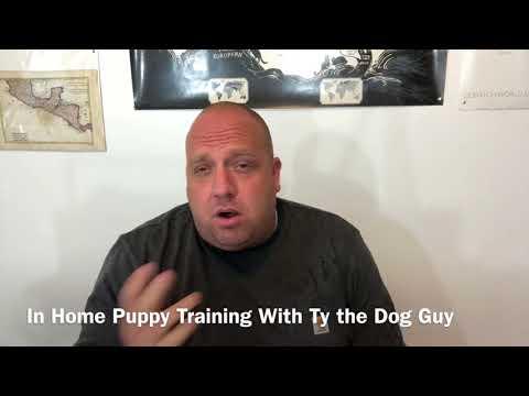 In Home Puppy Training- Utah Puppy Training