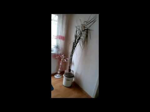 Комната посуточно Мукачево: Видеообзор комнаты в центре города от владельца ✔️ Безопасная аренда